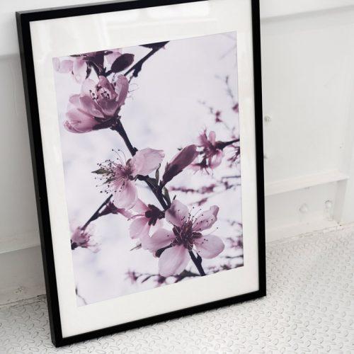 poster bloemen bloesem paars