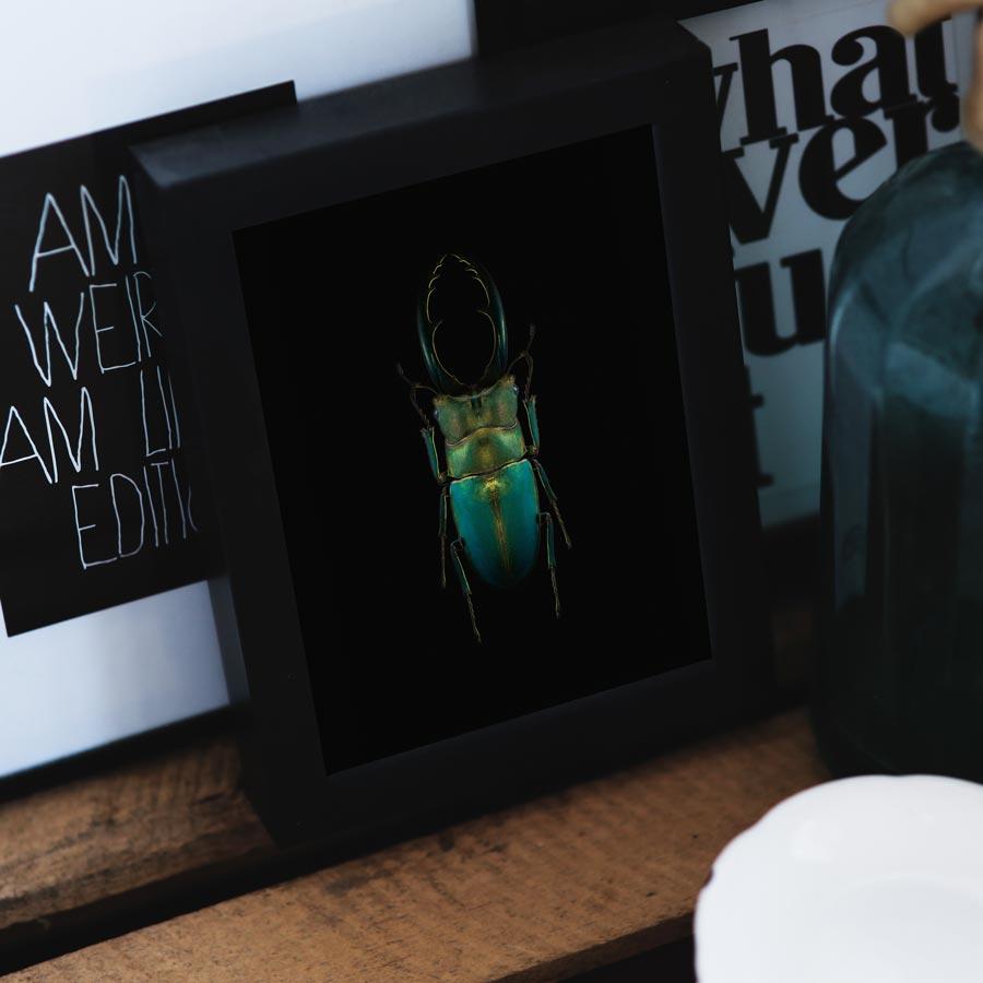 poster insect kever blauw groen met scharen op zwart