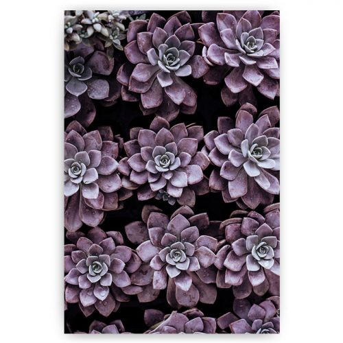 poster vetplant paars