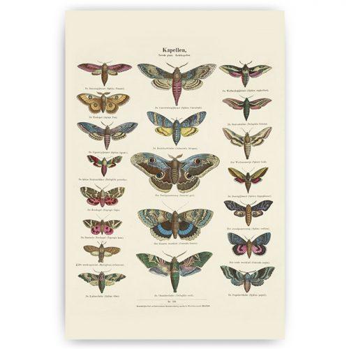 poster vintage vlinders