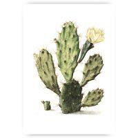 Muurposter cactus