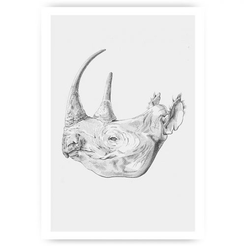 Muurposter tekening neushoorn