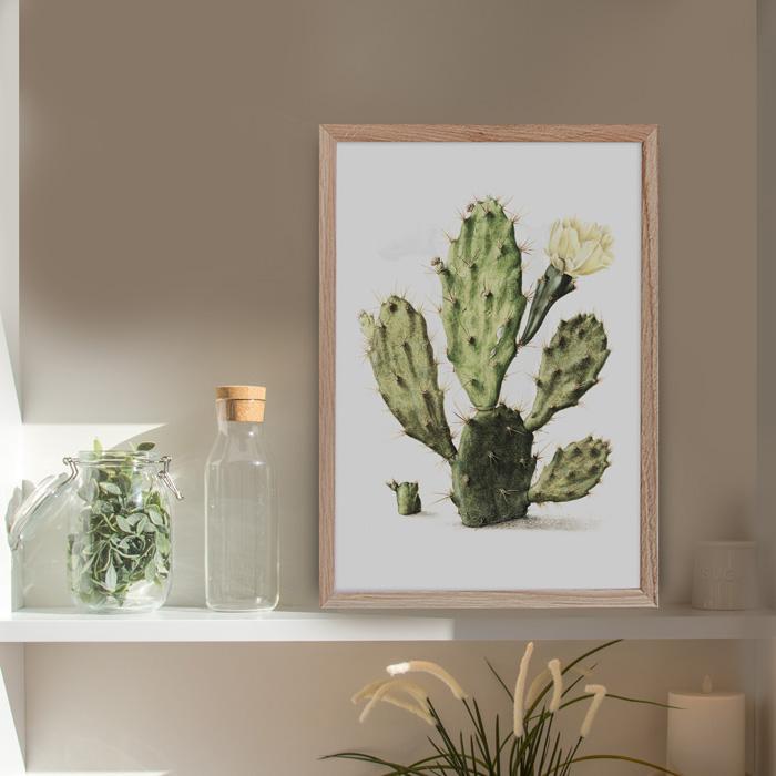poster cactus bloem