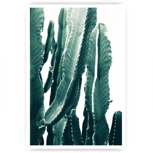 poster cactus stengels groen tekening