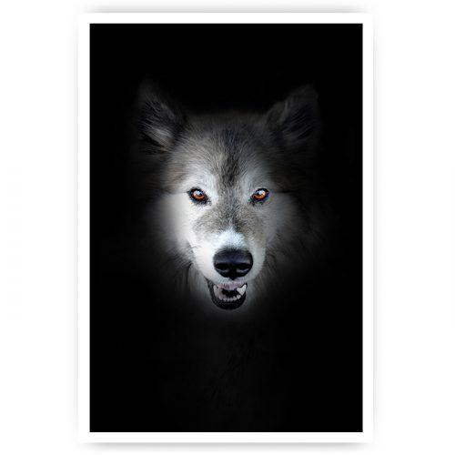 muuroster mysterieuze wolf