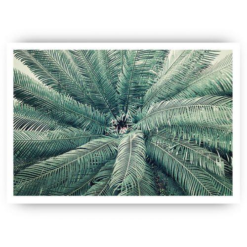 poster palmboom inkijk