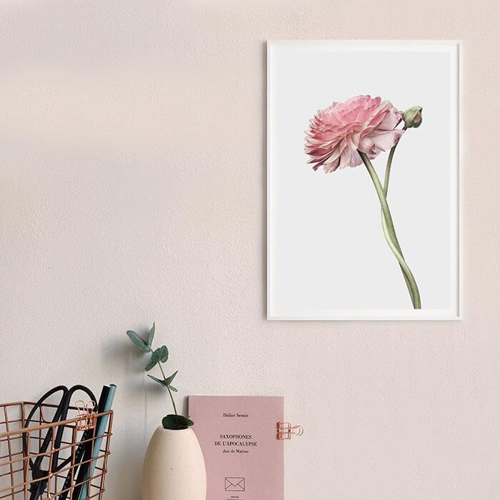 poster roze bloem met knop