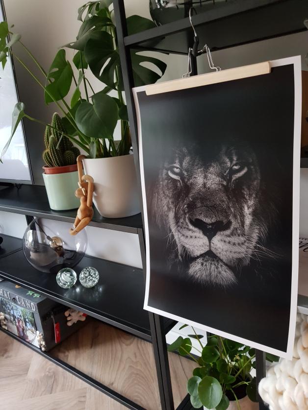 poster leeuw woonkamer
