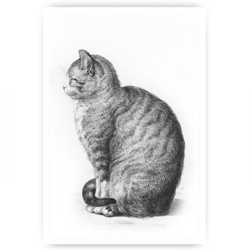poster zittende kat poes tekening