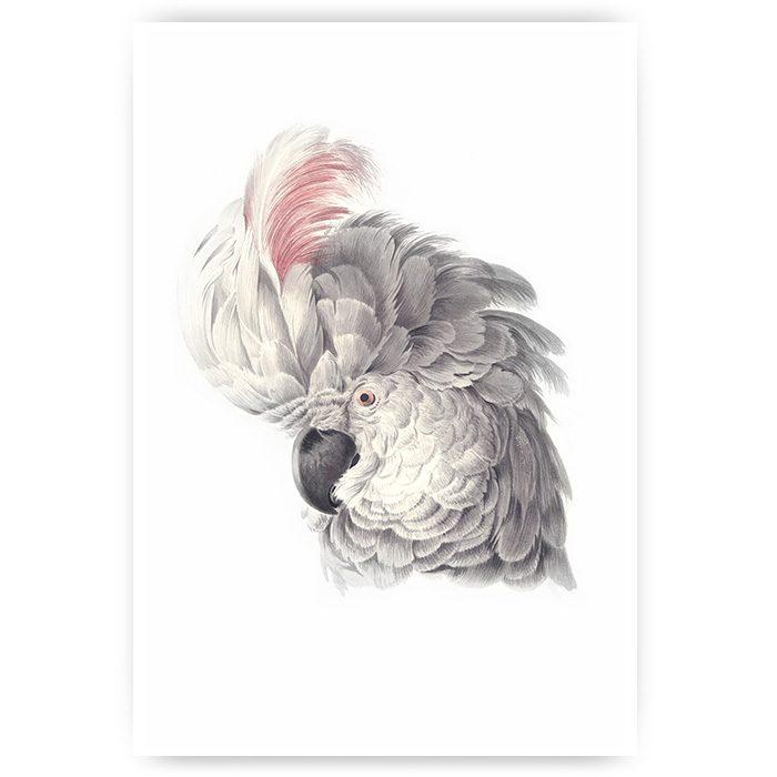 poster Witte kaketoe