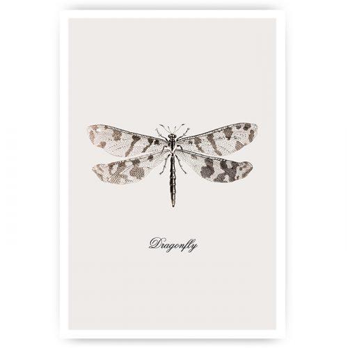 poster vintage libel dragonfly