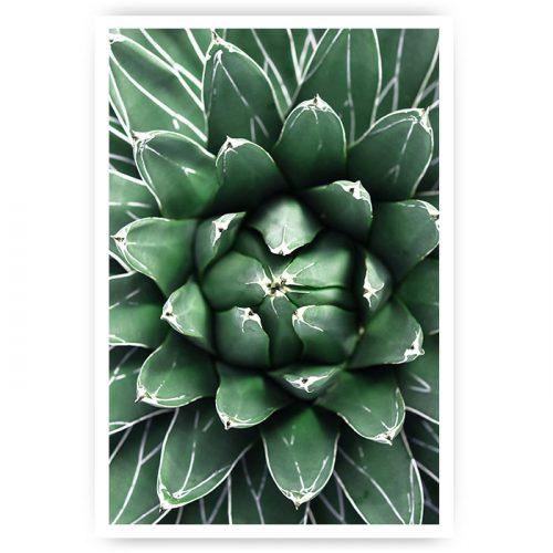 poster cactus close-up