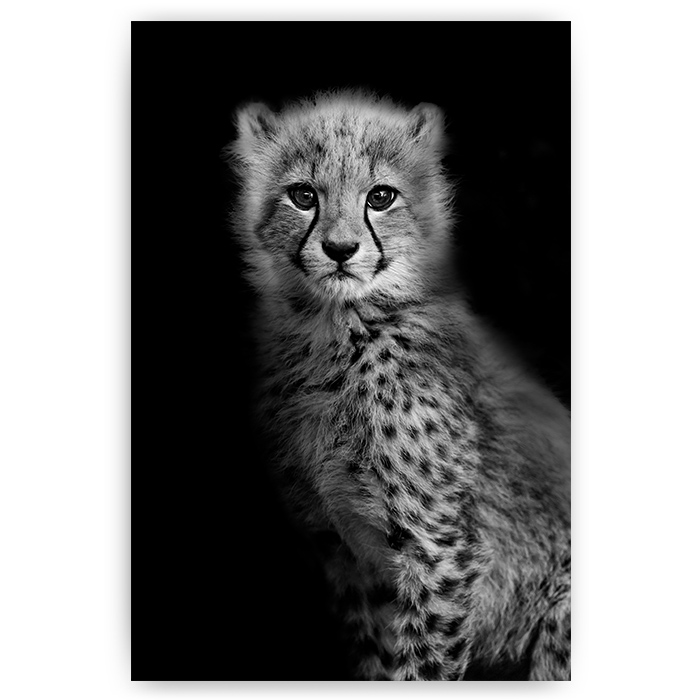 poster luipaard welp zwart wit