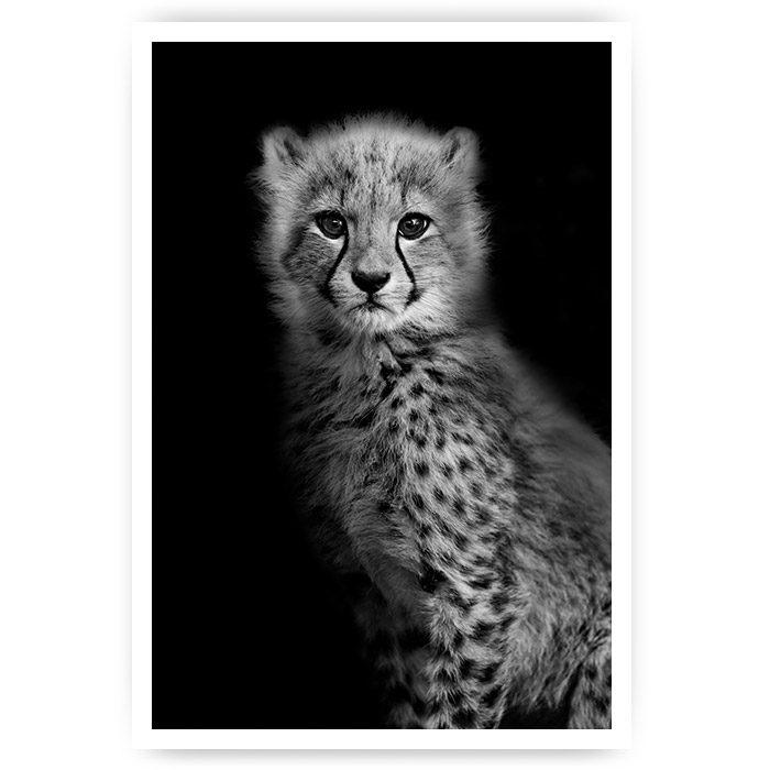 luipaard welp poster