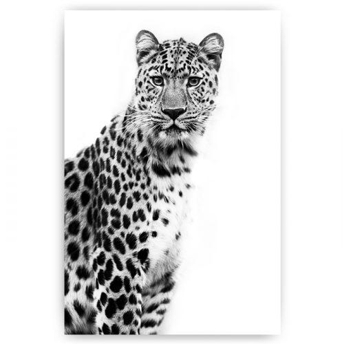 poster luipaard zwart wit