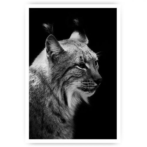 poster lynx zwart-wit