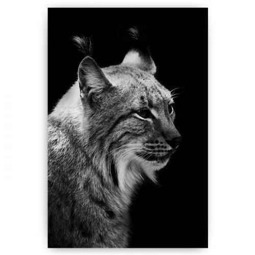 poster lynx zwart wit