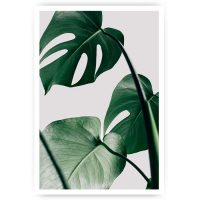 poster monstera plant blad