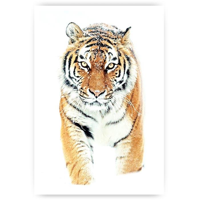 poster tijger in de sneeuw