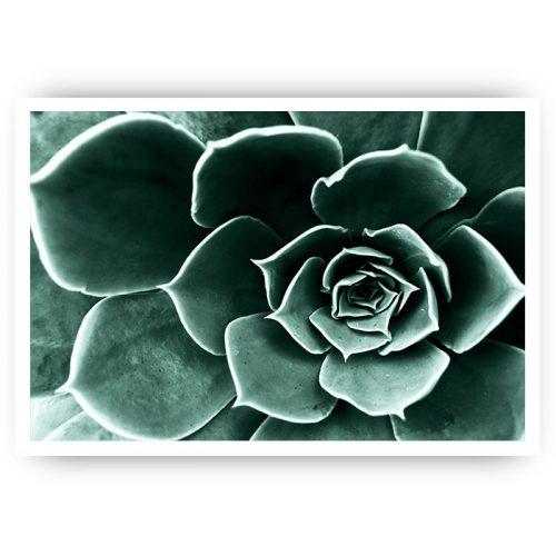 poster vetplant groen botanisch cactus