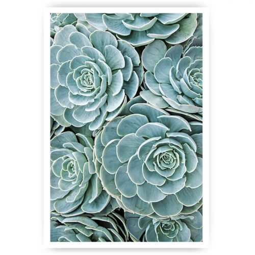 poster vetplant groen veld cactus