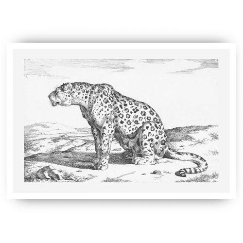 poster vintage luipaard tekening