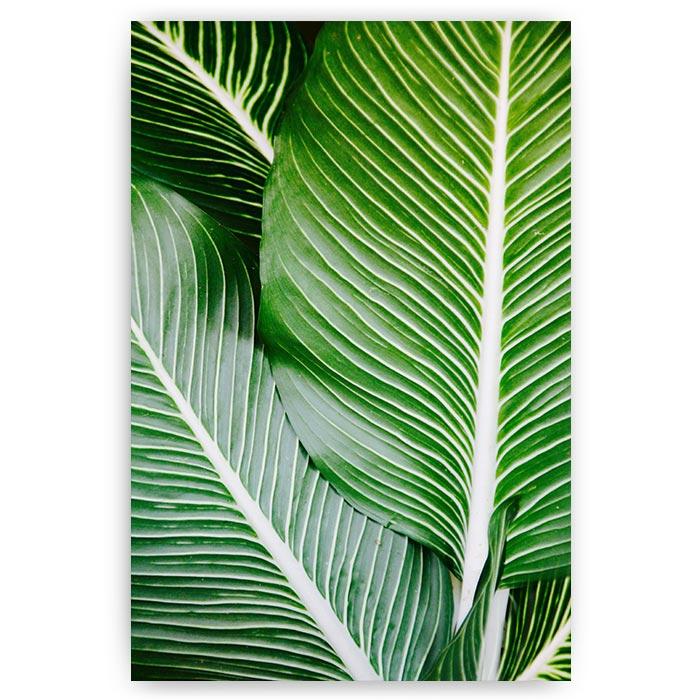 poster met groene bladeren palmbladeren