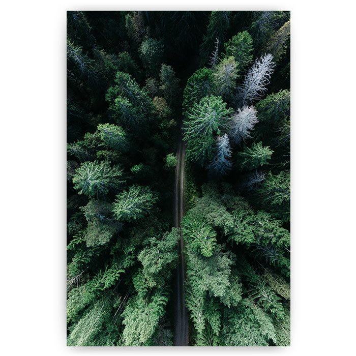 poster bos weg road forest