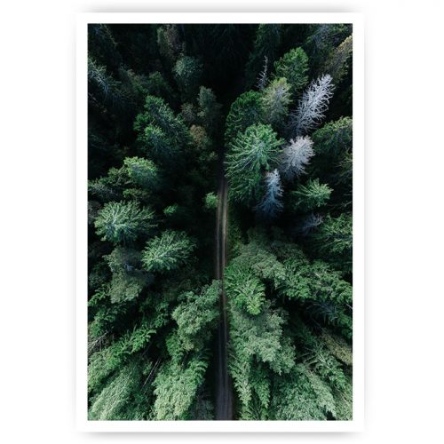 poster road forest bos pine