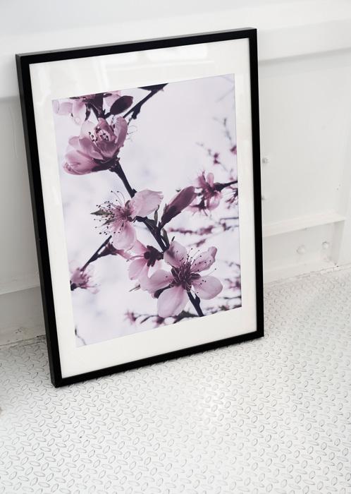 poster roze bloem