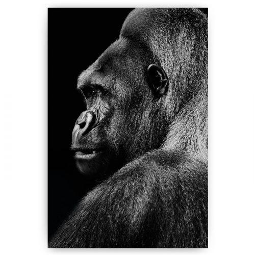 poster gorilla zwart wit