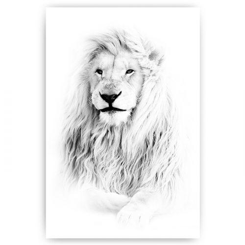 poster witte leeuw
