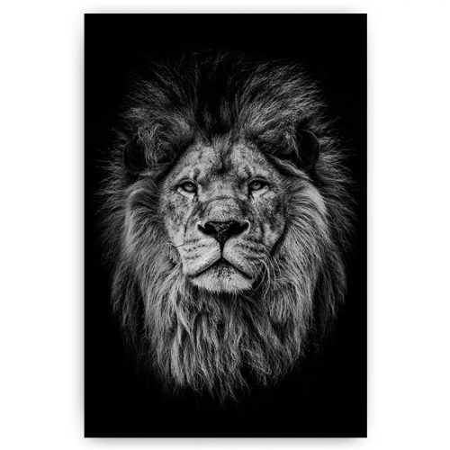 poster zwart wit leeuw