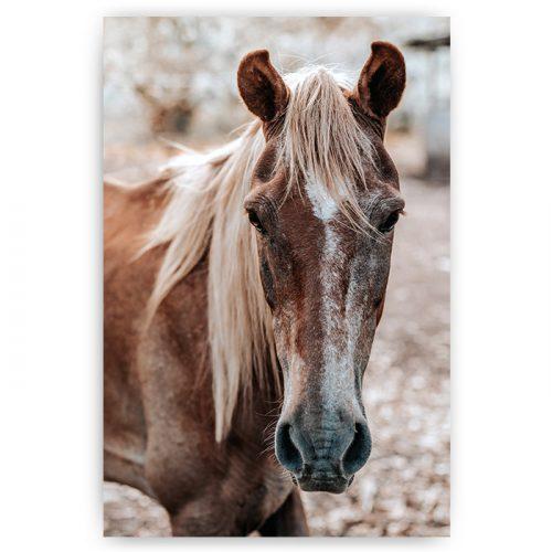 poster bruin paard