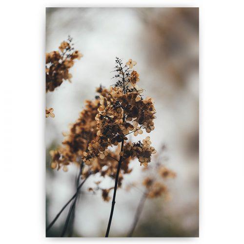 poster bruine bloem