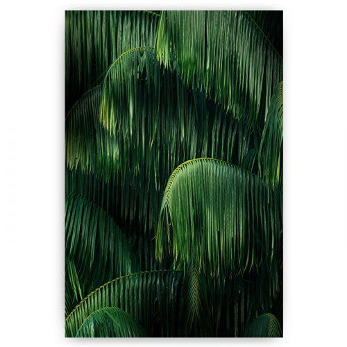 poster bladeren jungle