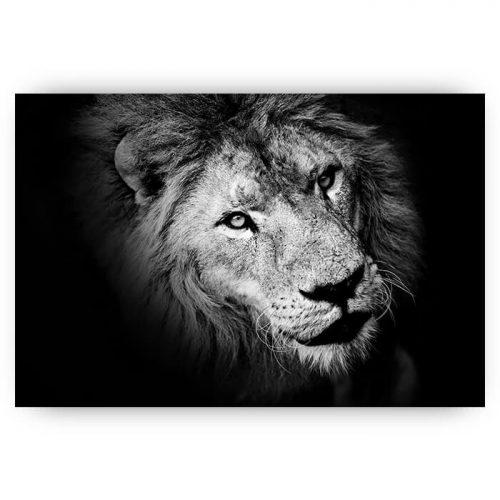poster leeuw zwart wit schaduw