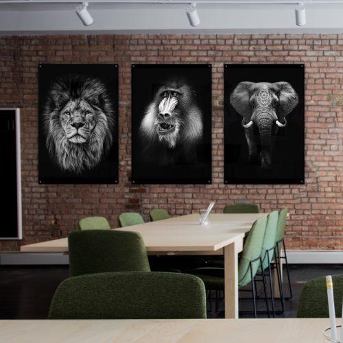 poster baviaan aap zwart wit