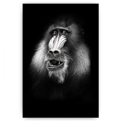 poster aap baviaan
