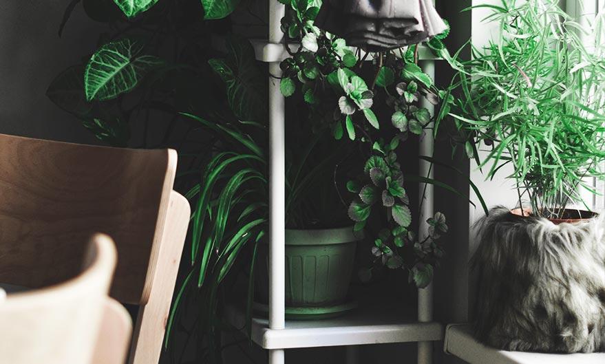 Creëer in 5 stappen een botanische inrichting!