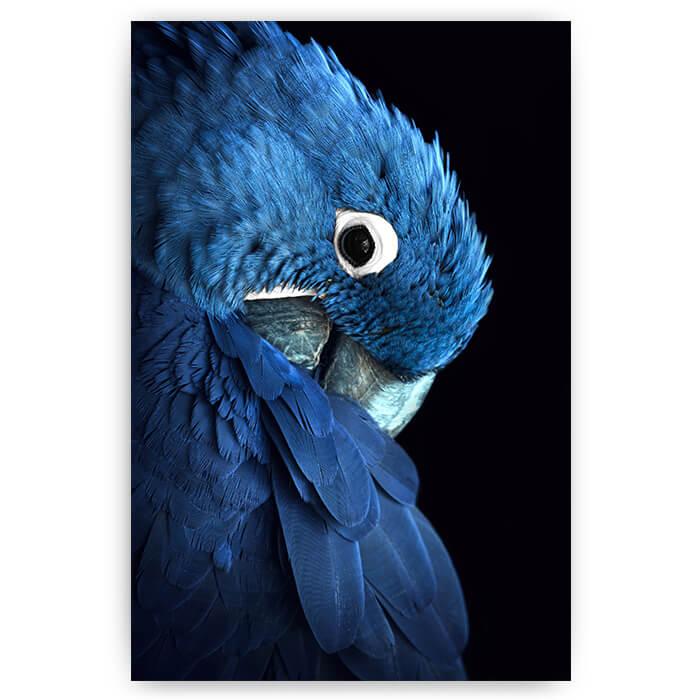 Super Poster blauwe papegaai | Dieren wanddecoratie - Sfeer aan de Muur OL-66