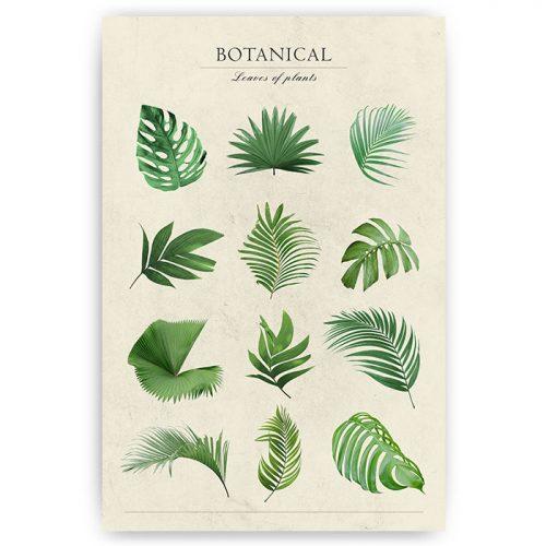 botanische poster planten bladeren
