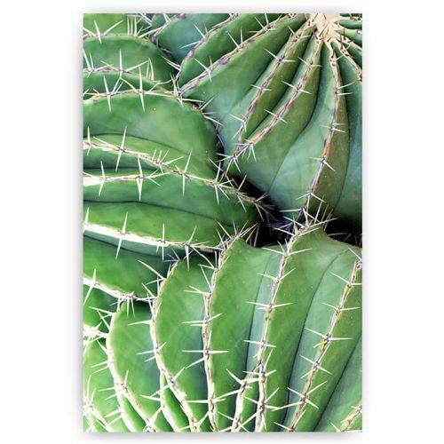 poster cactus met stekels