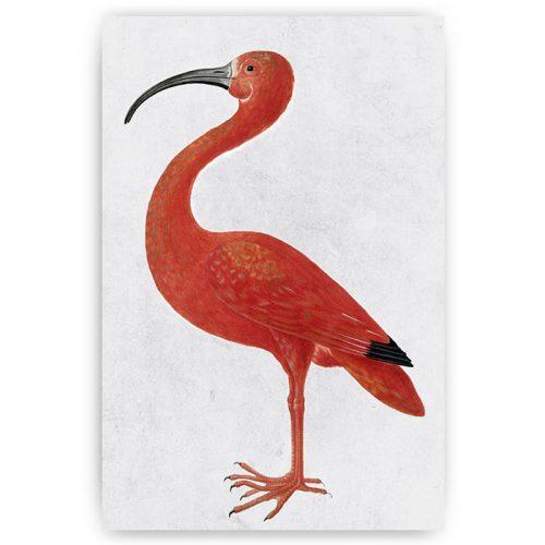 vintage poster ibis vogel