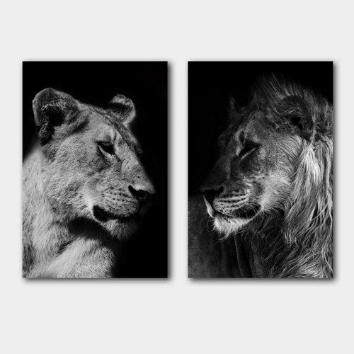 poster set leeuw leeuwin zwart wit