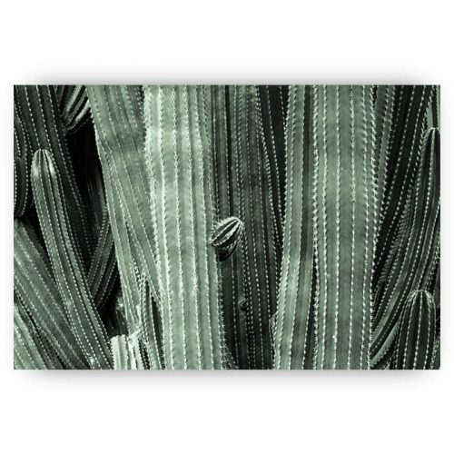 poster cactus groen plant