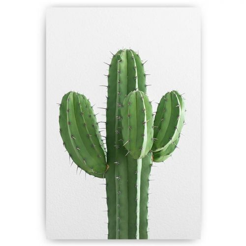 poster groene cactus