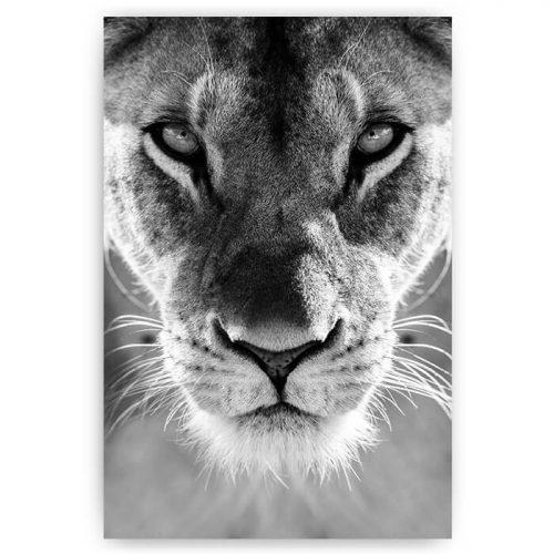 poster kop leeuwin zwart wit