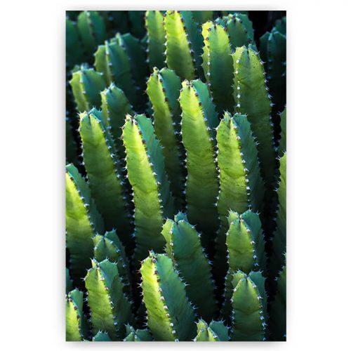 poster langwerpige cactussen