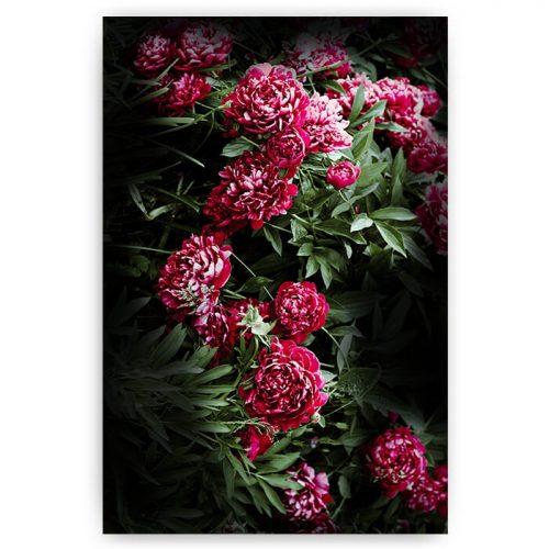 poster paarse bloemen struik